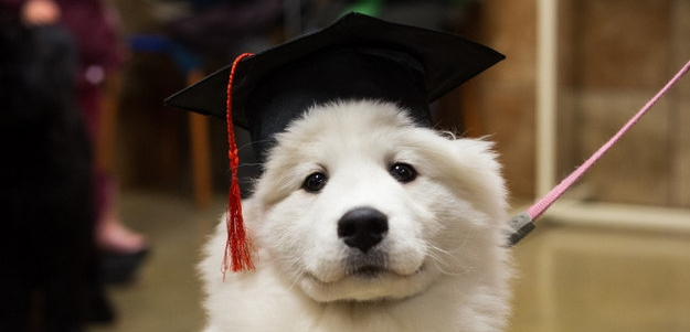 mortarboard puppy!