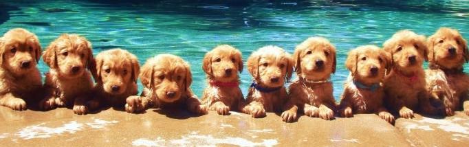 so many puppies!
